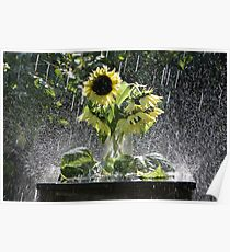 Shower Arrangement Poster