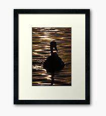Swan Sunset Framed Print
