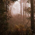Bushwalking in the Fog By Lorraine McCarthy by Lozzar Landscape