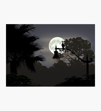 Florida Moonlight Photographic Print
