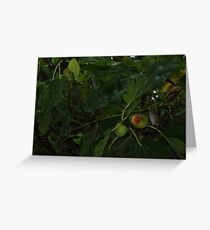 Fig and Silver Eye Greeting Card