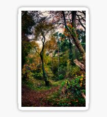 Forest Trees HDR Sticker