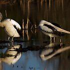 Sunset Wings by byronbackyard