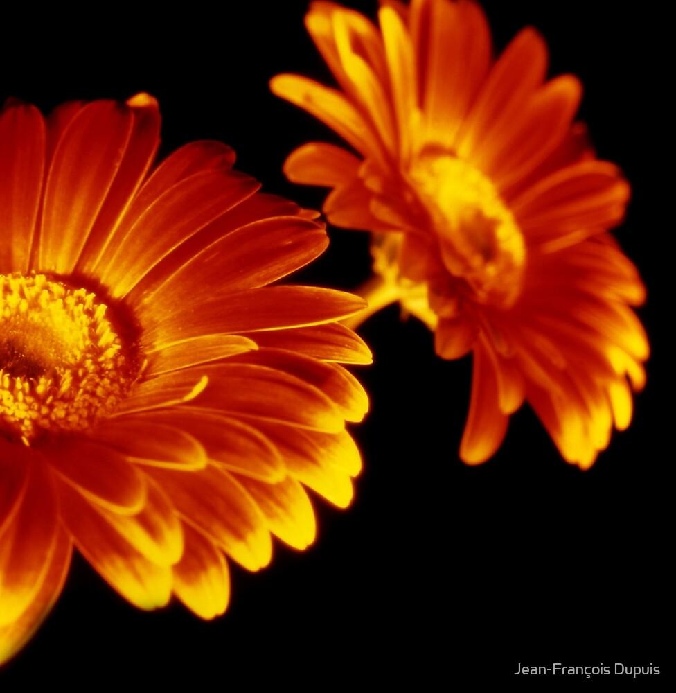 Flowers by Jean-François Dupuis