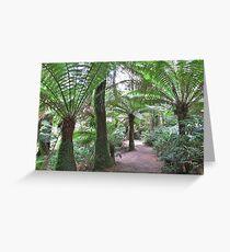 Australian Otways Rainforest Greeting Card
