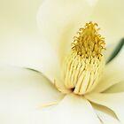 Magnolia Cream by Belinda Osgood