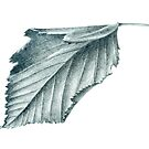 Cherry Leaf by Jarrod Hall Art