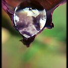 Raindrops on Roses by OzShell