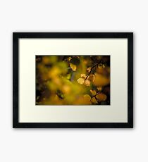 Fagus Display - Cradle Mountain, Tasmania Framed Print
