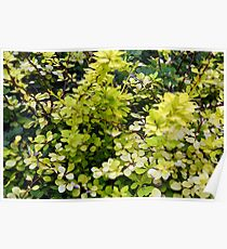 Natural background with yellow green leaves. Poster