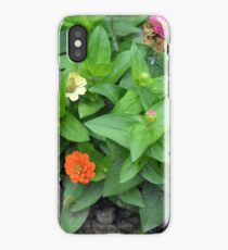 Colorful pink and orange flowers in green leaves bush in the garden. iPhone Case