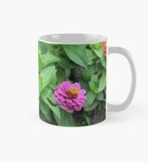 Colorful pink and orange flowers in green leaves bush in the garden. Mug
