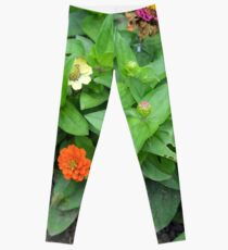 Colorful pink and orange flowers in green leaves bush in the garden. Leggings