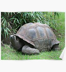 Tortoise 2 Poster
