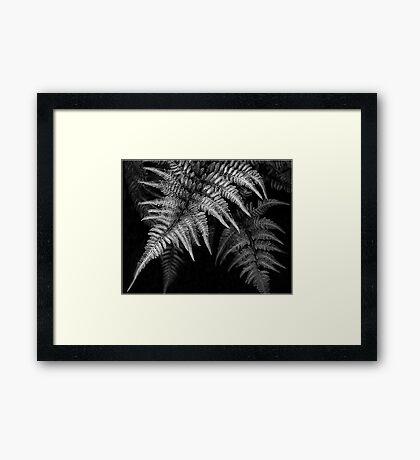 Fern in Black & White Framed Print