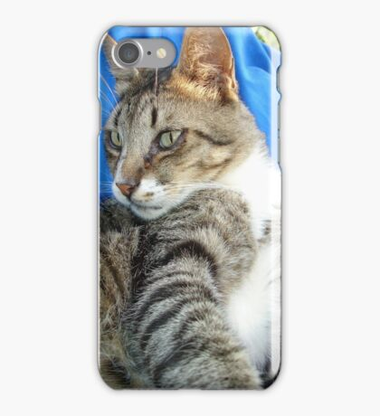 Tabby Cat Against Blue Cloth Background iPhone Case/Skin