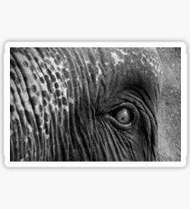 Close-up shot of Asian elephant eye Sticker