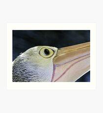 Pelican portrait, Port Douglas, Queensland Australia Art Print