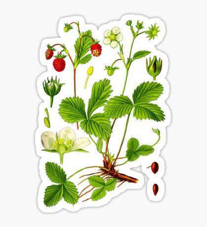 alpine strawberry Sticker