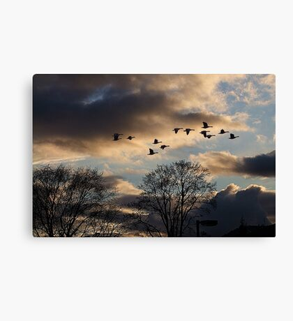 Geese Coming Home Canvas Print
