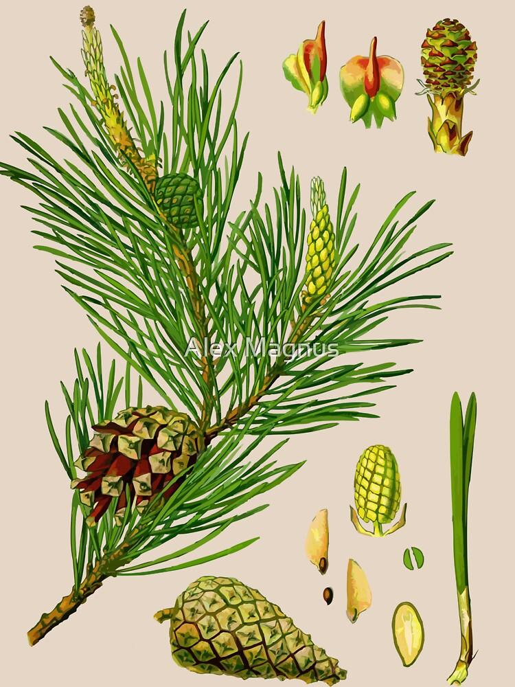 pine by jackwhite87