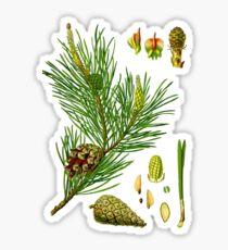 pine Sticker