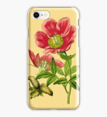 wild peony iPhone Case/Skin