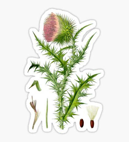 thistle Sticker