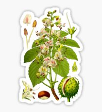 chestnut Sticker