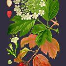 guelder rose by Alex Magnus