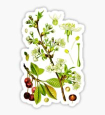 sour cherry Sticker