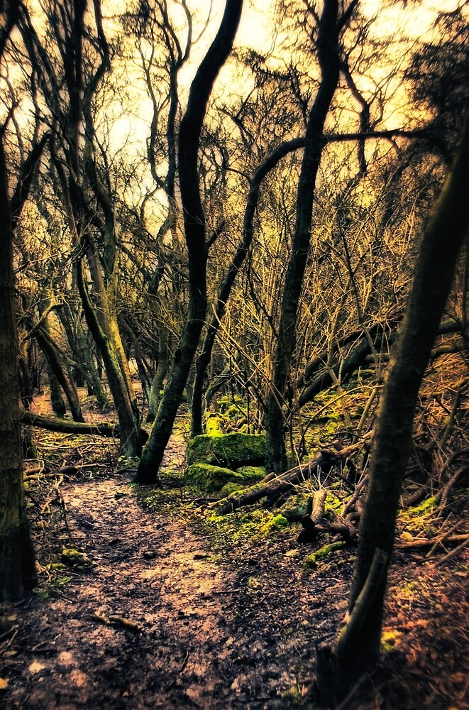 Woodland Wandering  by Vicki Field