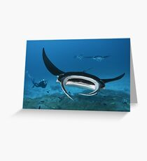 Manta-Mania Greeting Card