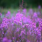 Flower Dreams .  Andrzej Goszcz Photography. by © Andrzej Goszcz,M.D. Ph.D