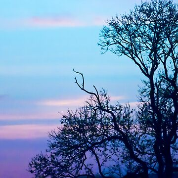 Tree on a pastel sky by InspiraImage