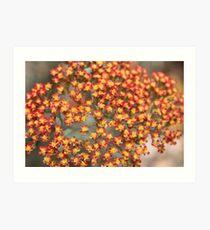 Flowers Tiny Tiny Art Print