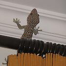 Giant Gecko Pays a Visit by Keith Richardson
