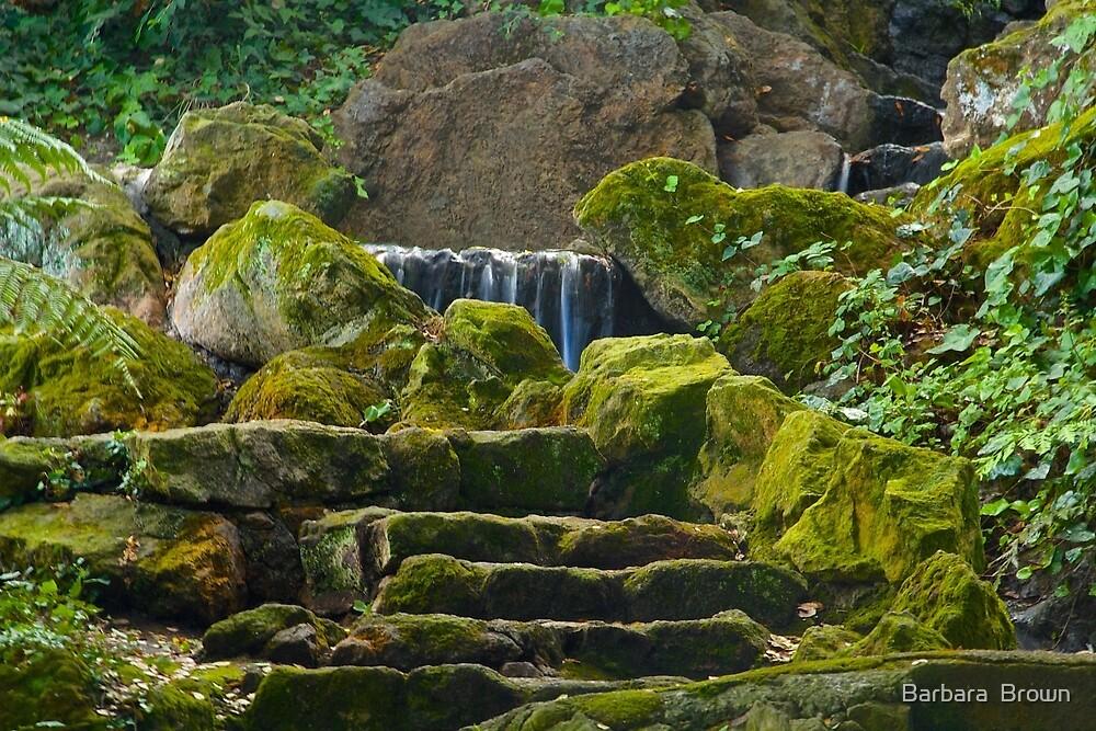 Mossy Steps by Barbara  Brown