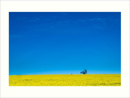 Canola field near Ballarat by Nils Versemann