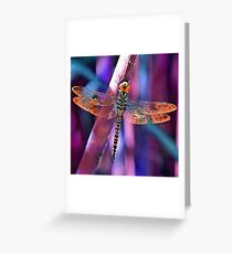 Dragonfly In Orange and Blue Greeting Card