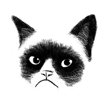 Angry Cat by tummeow