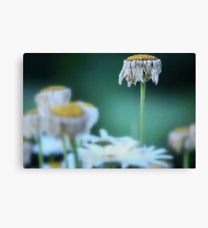 Finite Flower Canvas Print