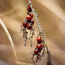 Ladybug Gathering  by Vicki Field
