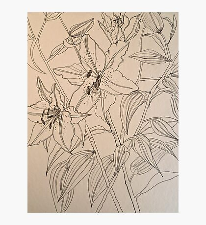 Lilies.  Pen sketch EMoore Golding© Photographic Print