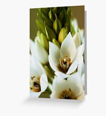 Beauty of the Tuberose Greeting Card