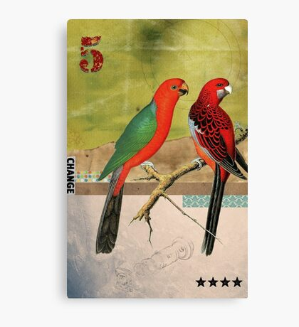 Animal Collection by Elo -- Birds Canvas Print