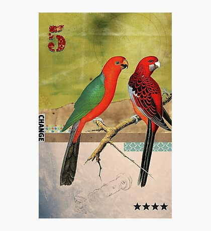 Animal Collection by Elo -- Birds Photographic Print