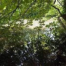 Kelsey Park Reflections by John Gaffen