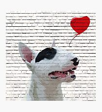 English Bull Terrier Banksy Style Photographic Print