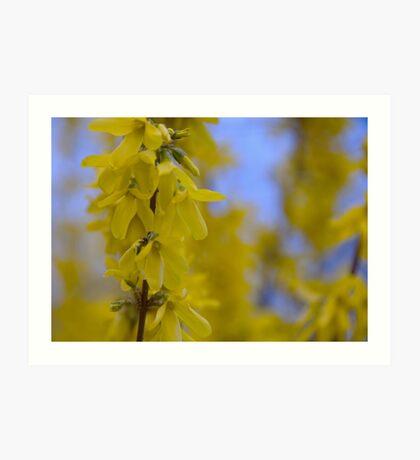 Yellow flowers near the Talvera River, Bolzano/Bozen, Italy Art Print